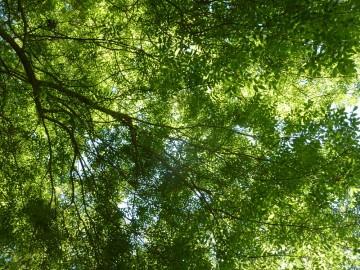 La place de l'arbre dans la ville