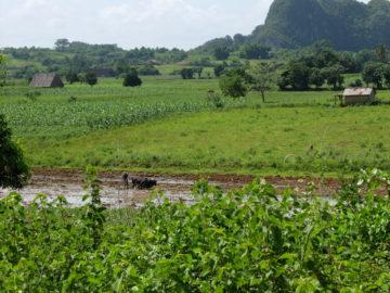 Agrobiologie : la révolution verte à Cuba