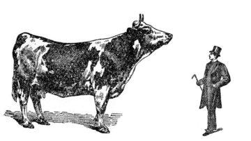 Rural ou la convergence des rustres - Conférence gesticulée