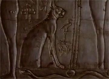 Révélation - La véritable identité des chats